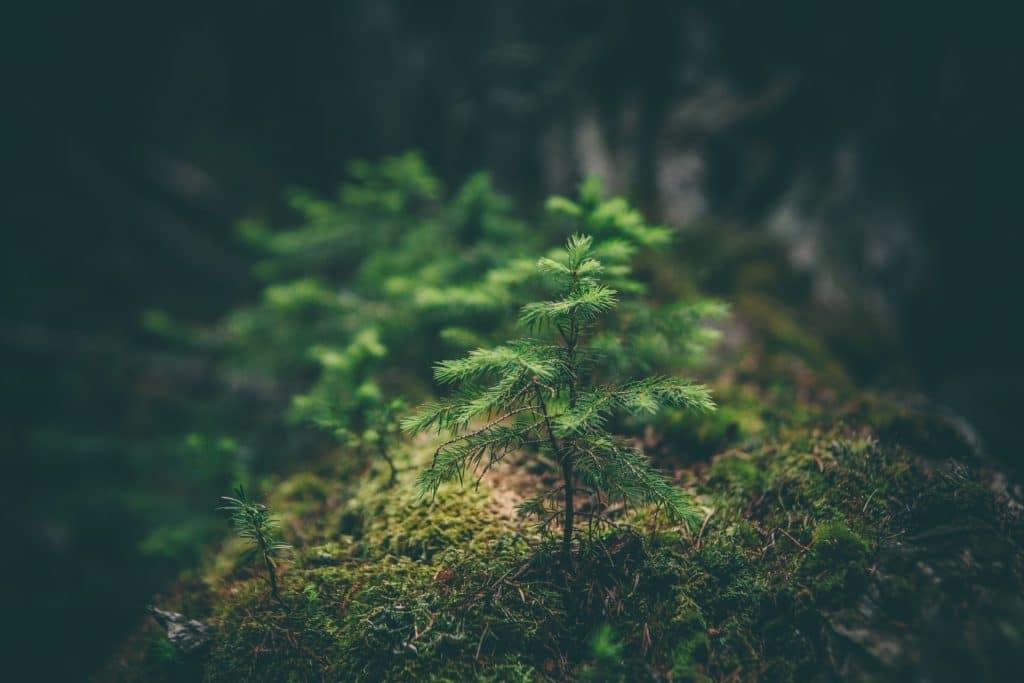 Comment calculer son impact environnemental ?